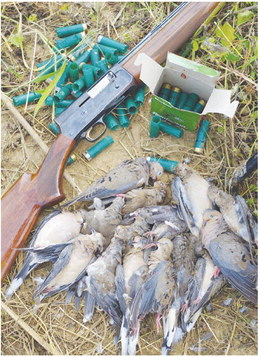 Application period begins for private-land permit dove hunts